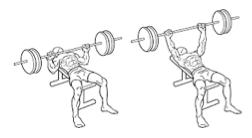 Trainingsschema hormoonfactor 6
