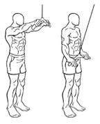 Trainingsschema hormoonfactor 7