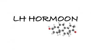 lh hormoon