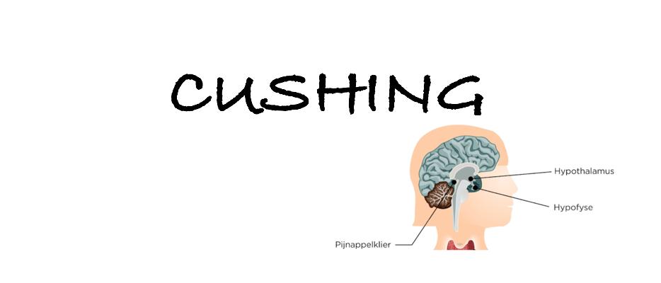 ziekte van cushing