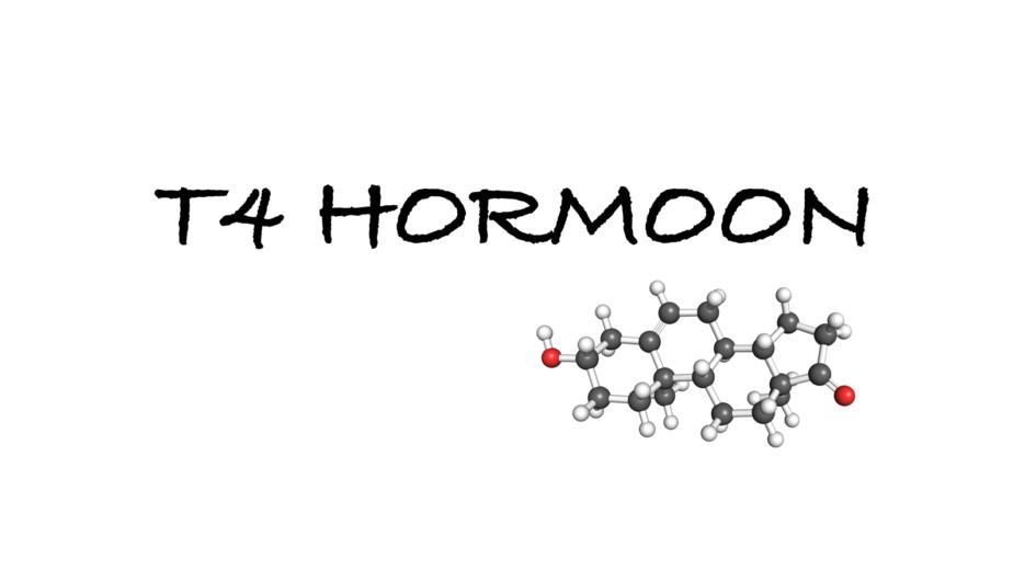 T4 hormoon