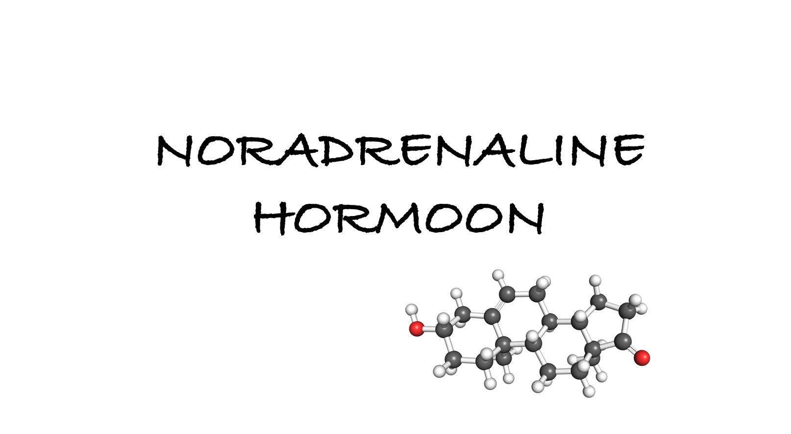 noradrenaline hormoon